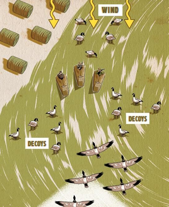 how to set up goose decoys