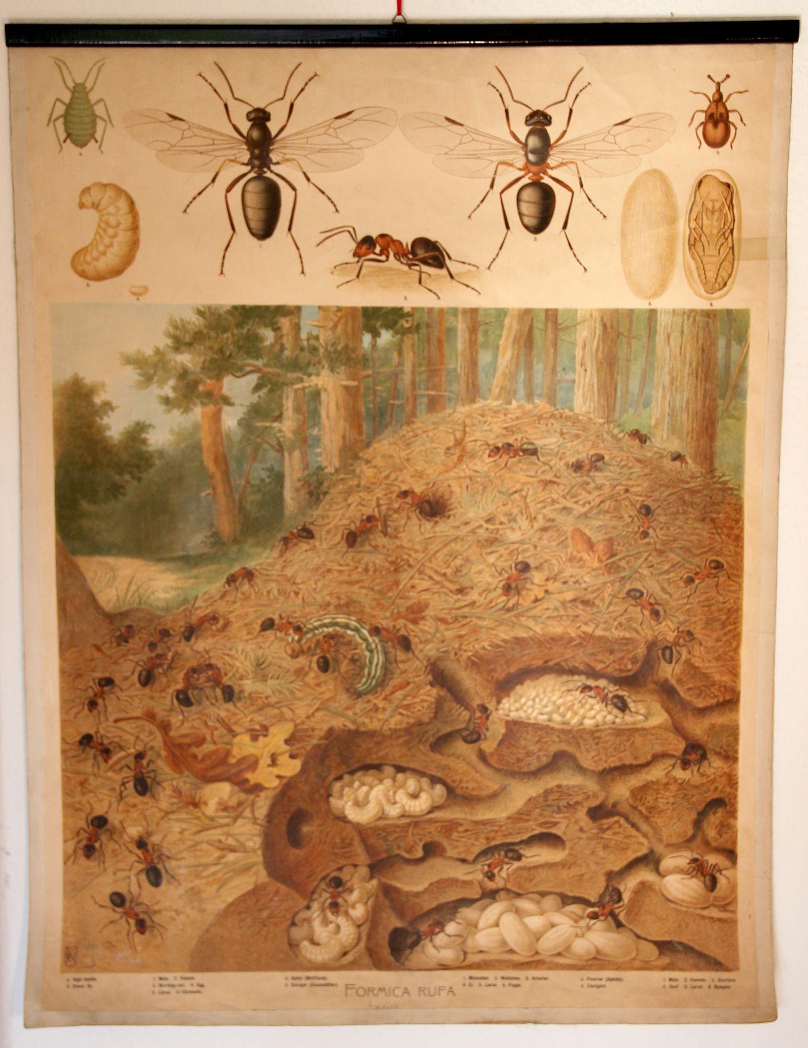 Schulkarte Ameisenbau | Wandkarte | Pinterest