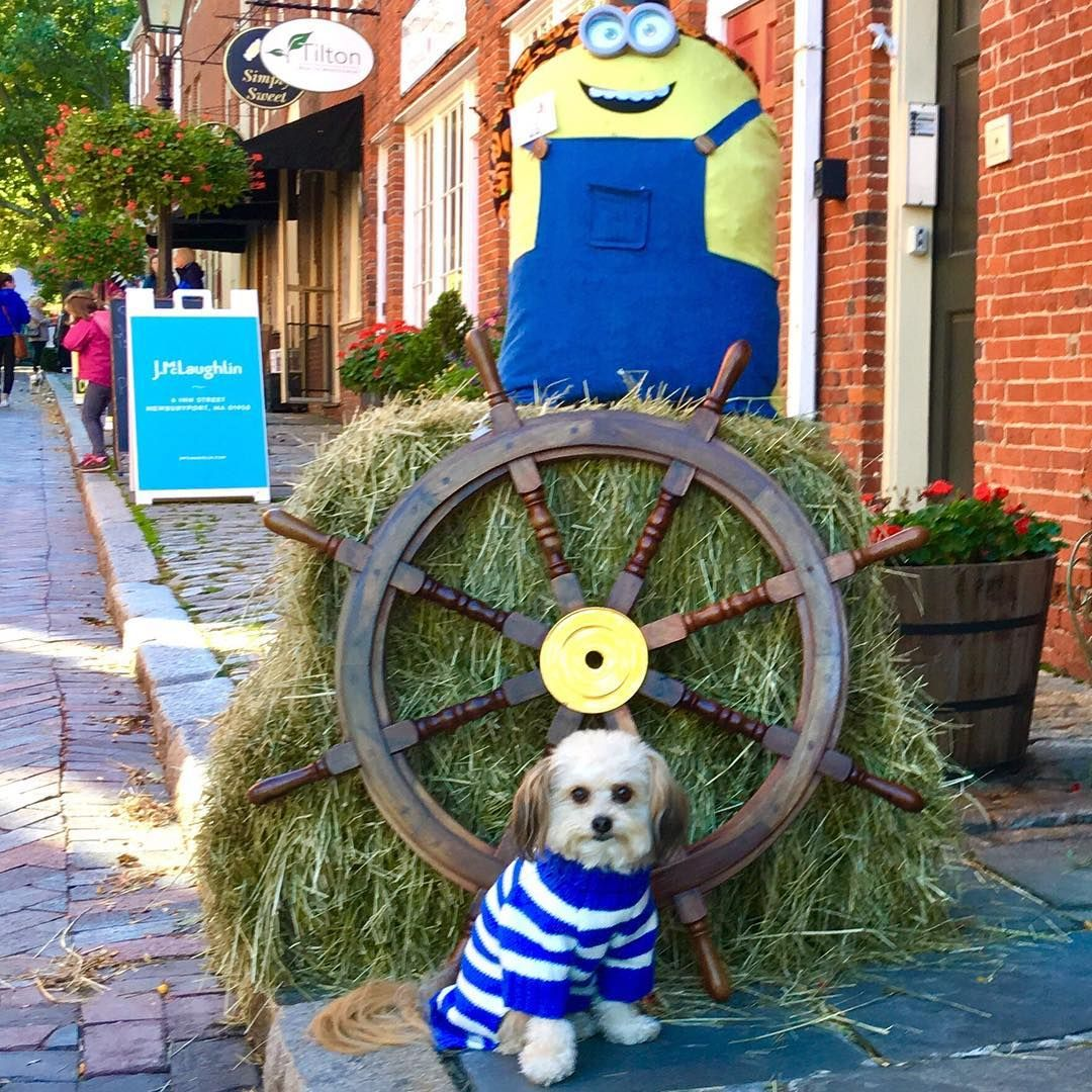 Met this minion at the Fall Festival in Newburyport, Massachusetts yesterday, but he wasn't near as nice as some of the other new friends I made while there!