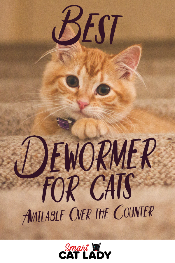 Best Dewormer for Cats Available Over the Counter Kitten