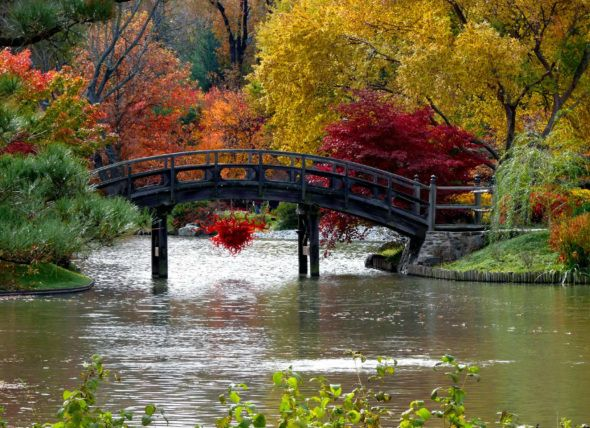 rboles de colores y jardn japones