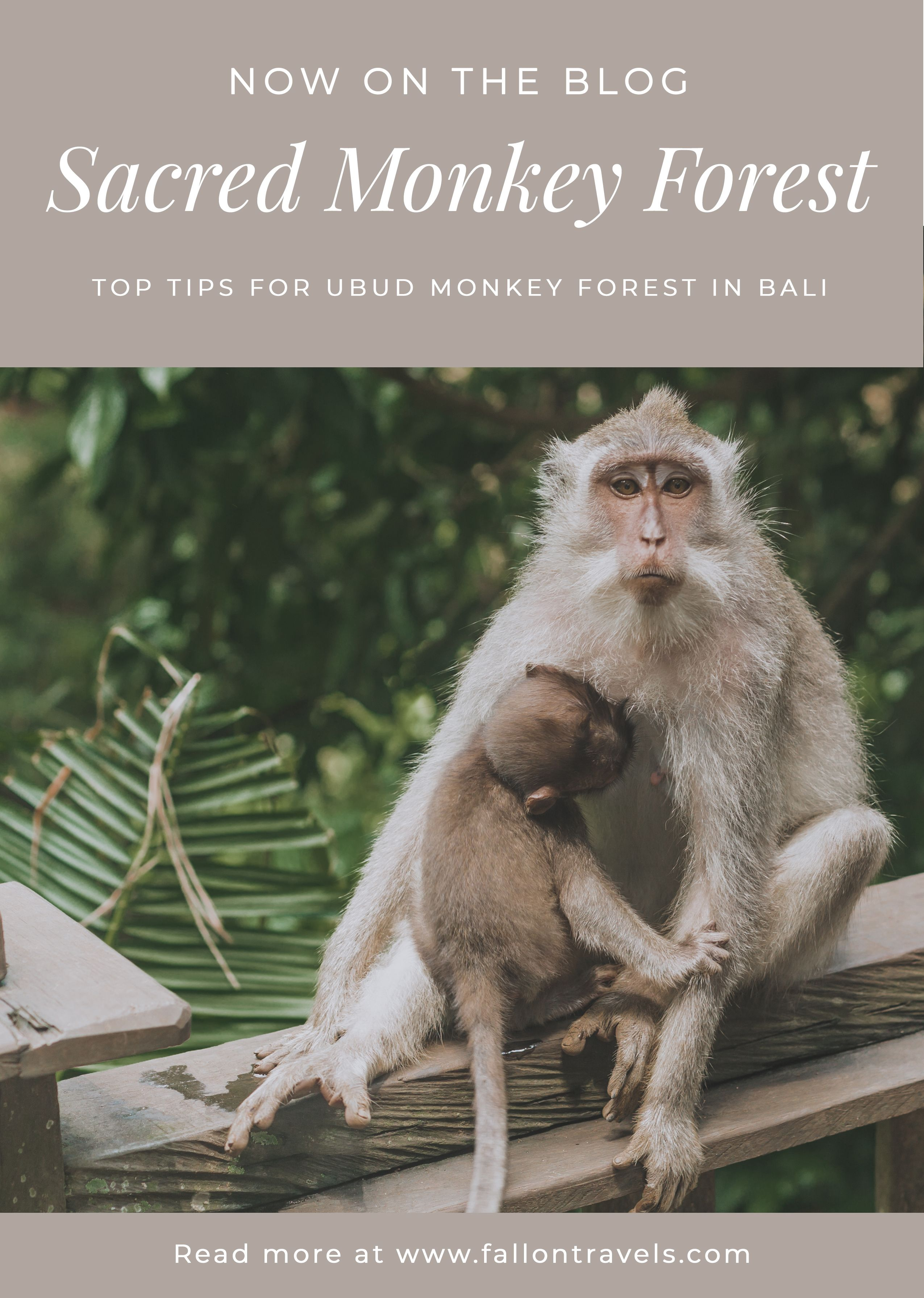 Top 8 tips for Ubud Monkey Forest in Bali, Indonesia