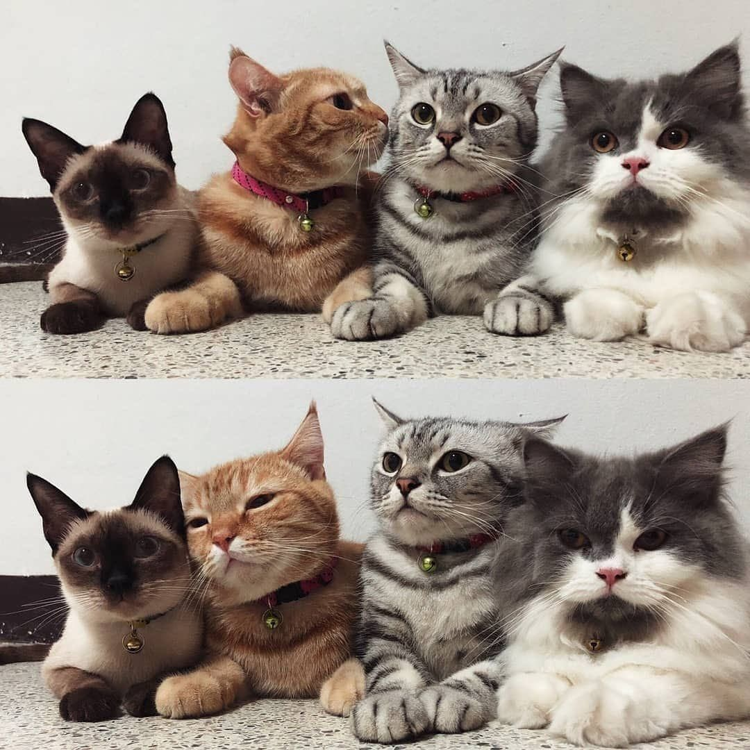 New Study Says Being A Cat Person May Be Good For Your Health 6 Benefits In 2020 Cute Cats Funny Animals Cute Animals
