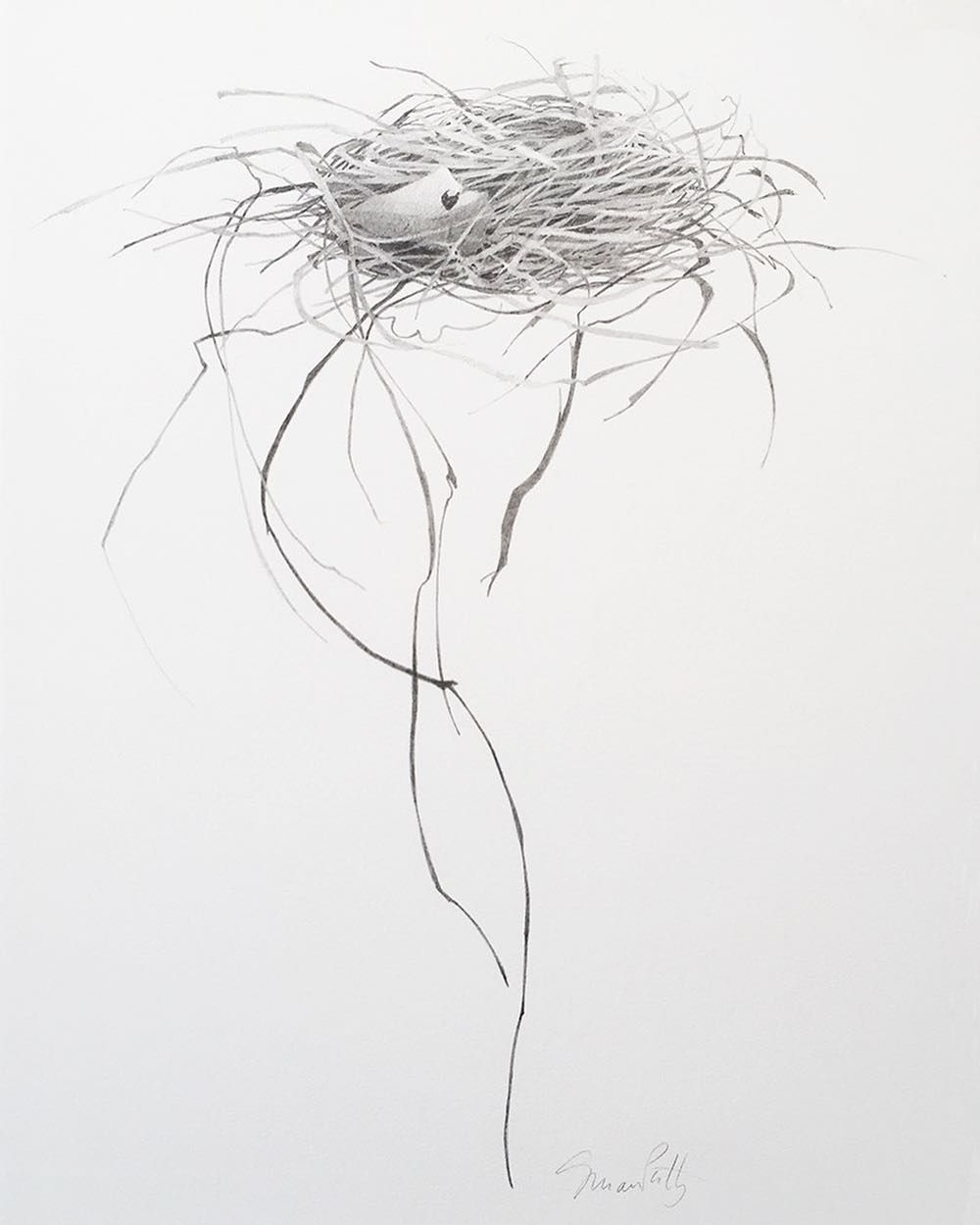 "Drawing of the week: Susan Petty ""Nest V"" graphite 16.513 ..."