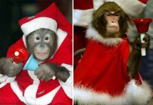 Funny Animals Christmas Animals Pinterest Funny Animal And Animal