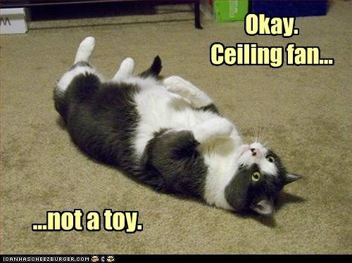 Okay Ceiling Fan Not A Toy Lolcat Funny Cat Memes Pics