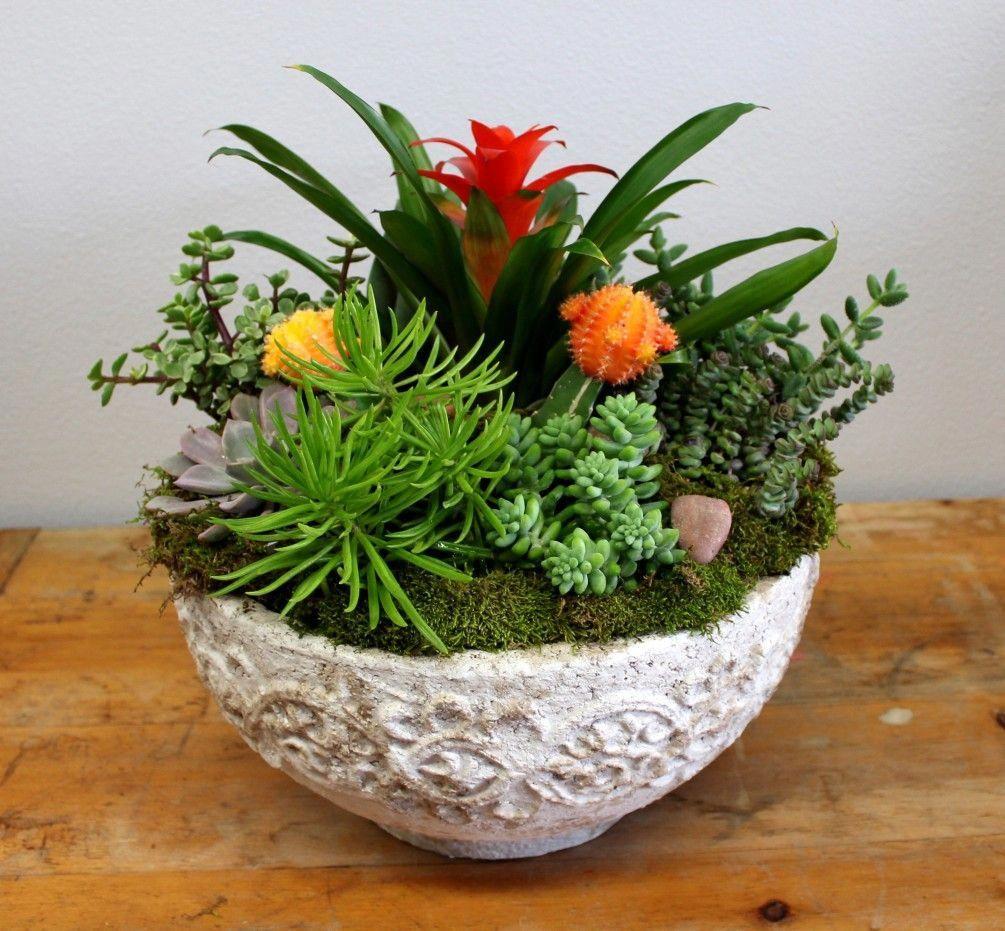 Stone Succulents By Manhattan Village Florist Gifts 640 x 480