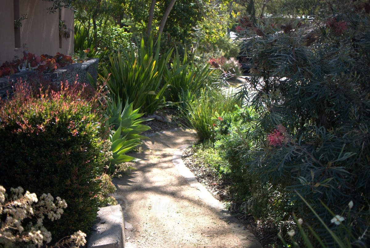 amazing nature strip garden with real street address