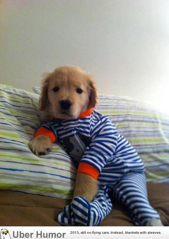 개옷 귀엽네