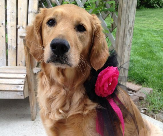 Flower Dogs gorgeous tulle collar in custom by TheBarkingBride, $35.00