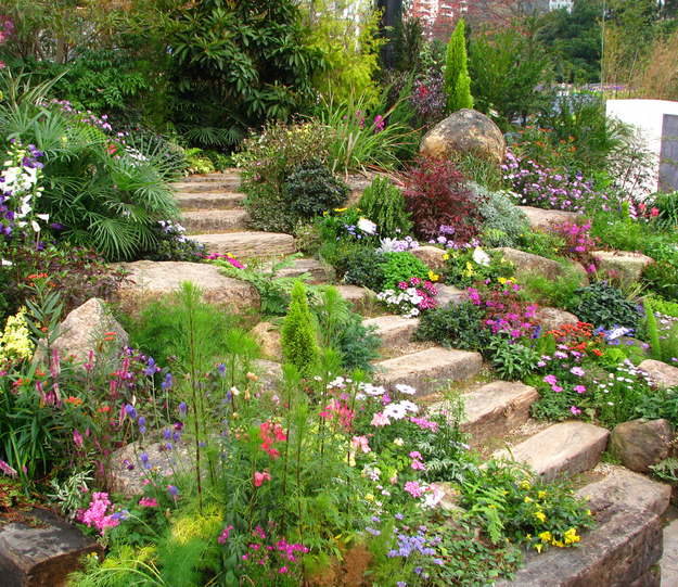 Landscaping Ideas For Sloped Front Yard: Drought Tolerant Plant Ideas For Your Homestead
