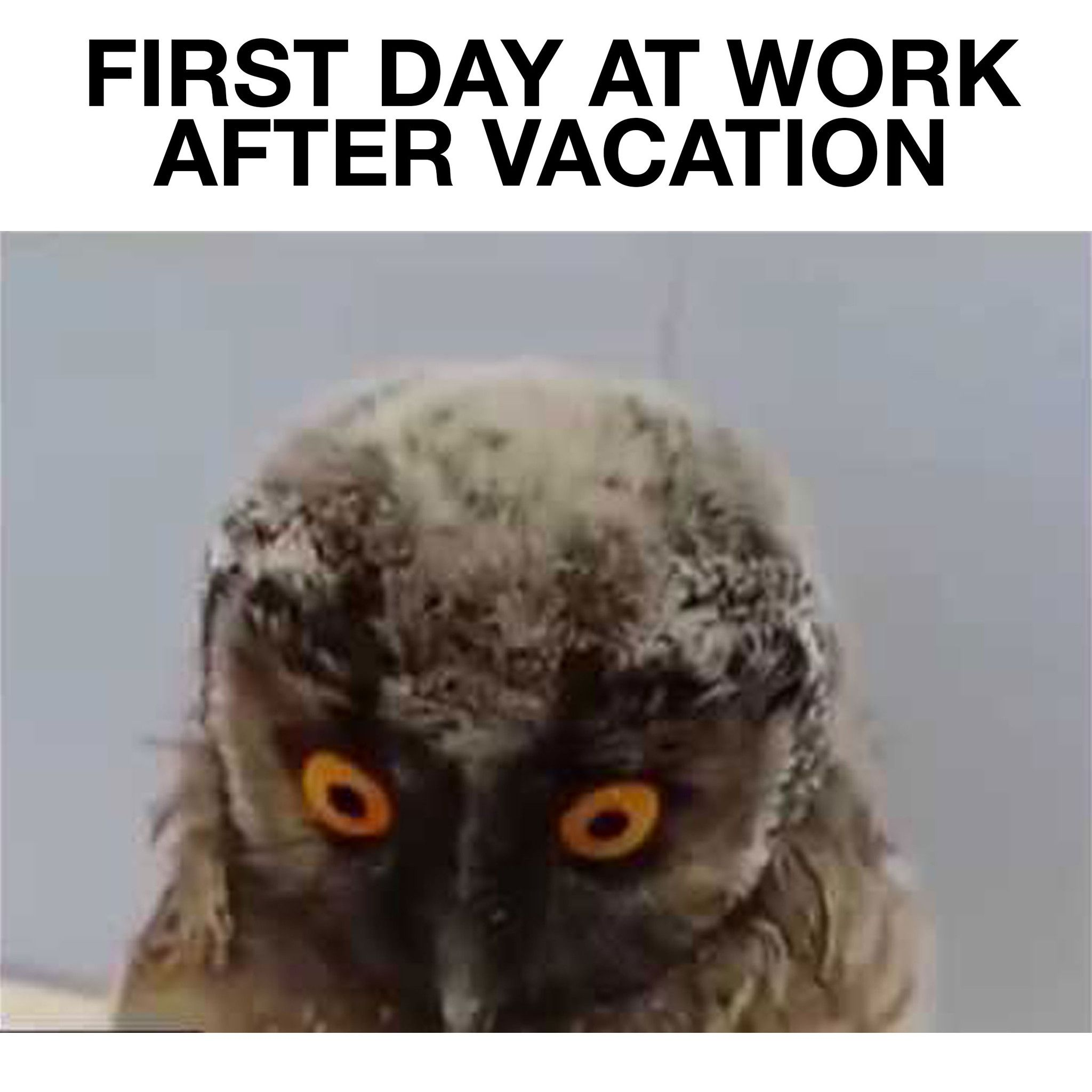 First Day At Work After Vacation Funny Owl Movie Work
