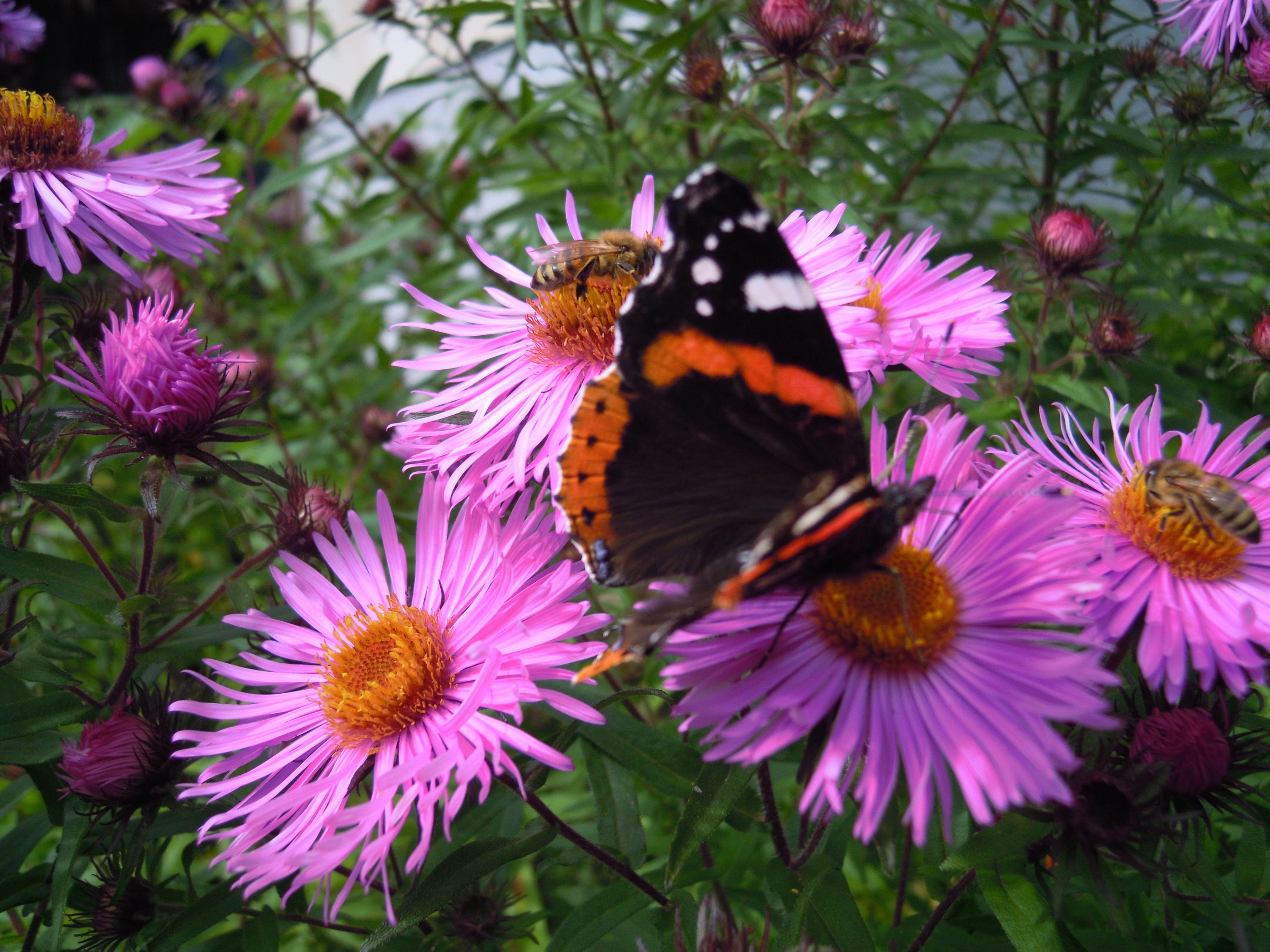 Settembrini fiori pinterest - Settembrini fiori ...