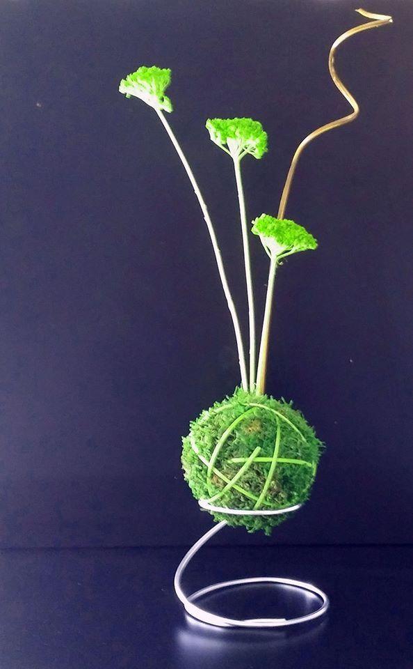 kokedama stabilise art japonais ikebana bonsai sans entretien diametre 15cm
