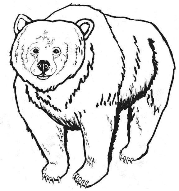 image result for fox and bear coloring pages - Grizzly Bear Coloring Pages