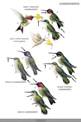 FREE App: Peterson Backyard Birds of North America   Birds ...