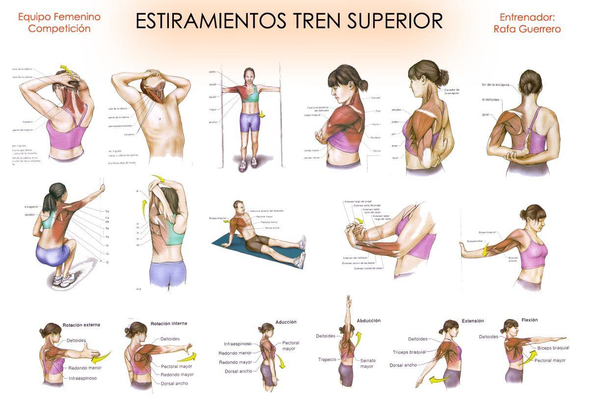 ejercicios de elongacion biceps