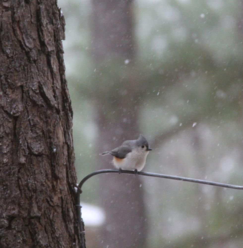 Bird in the snow. by angela.hesse