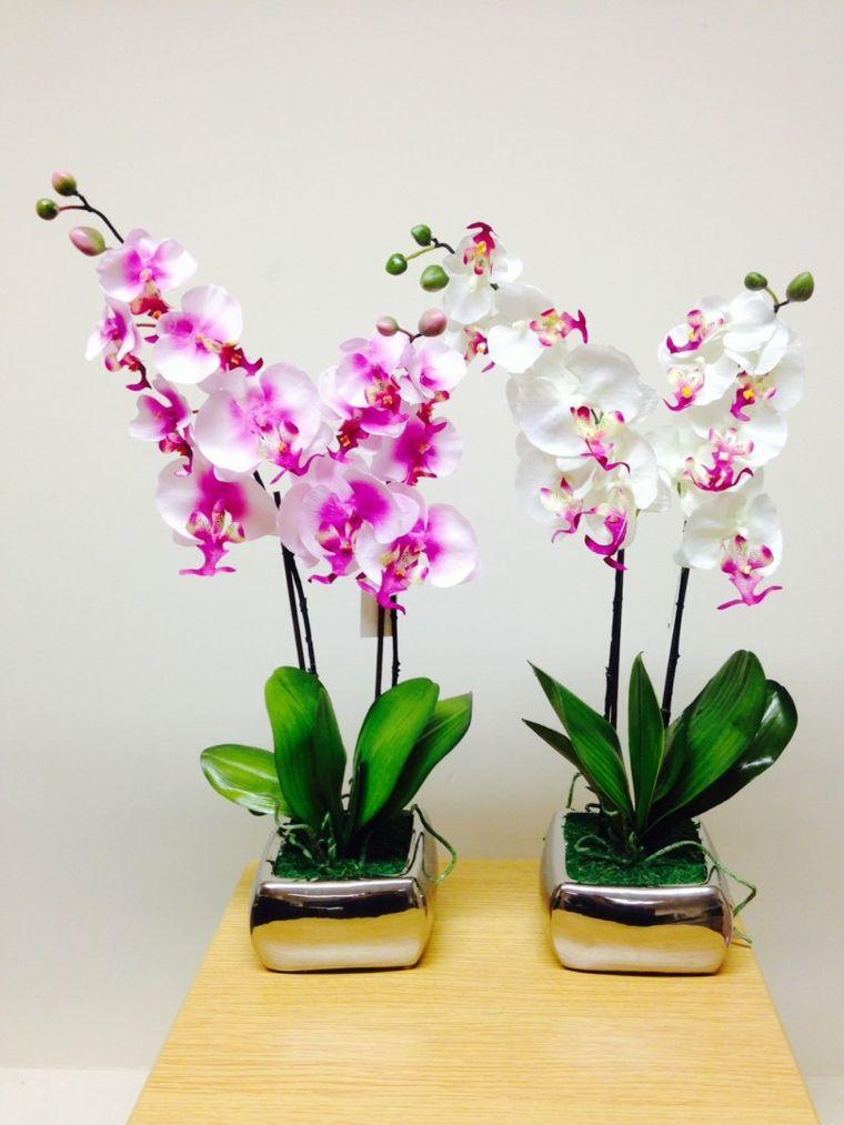 Plantas De Interior Con Flor Para Decorar Garden Plants