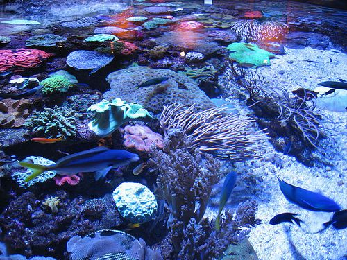 Quotes On Fringing Reefs: Favorite Places & Spaces