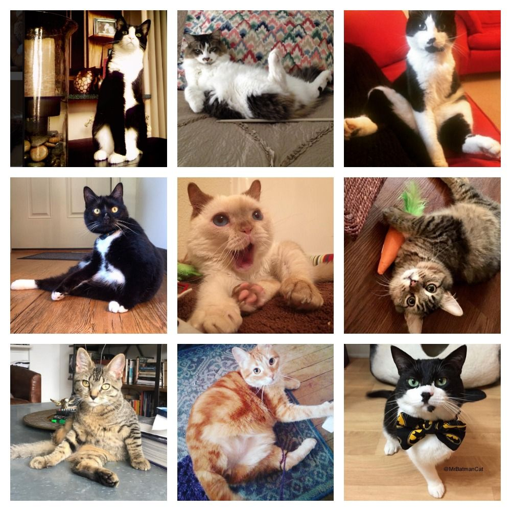 Which Three Legged Cat Are You Take This Quiz To Find Out Cats Cat S How To Find Out