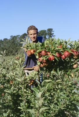 Which Fruit Trees Grow Best In Zone 8 Growing Fruit Trees Growing Tree Fruit Trees