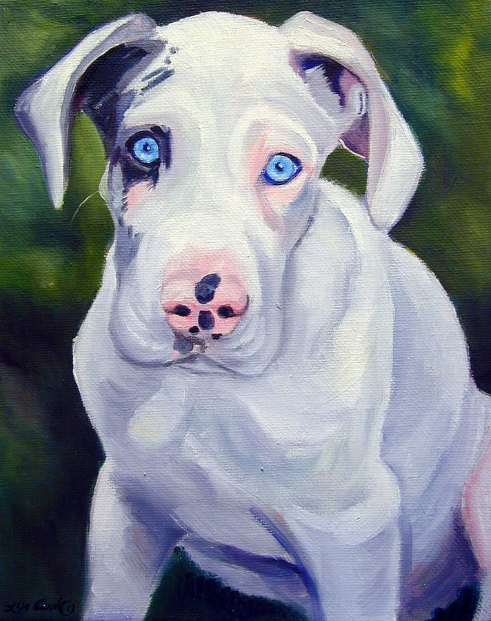 Great Dane Harlequin Puppy Danes Of My Heart Harlequin Great