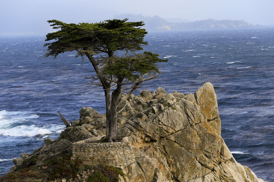 Standing before the Lone Cypress - Los Angeles Times