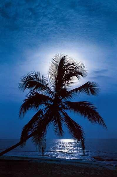 An enchanting poster of a palm tree on the beach back-lit by the full moon - A tropical paradise for your walls! Fully licensed. Ships fast. 24x36 inches. Check