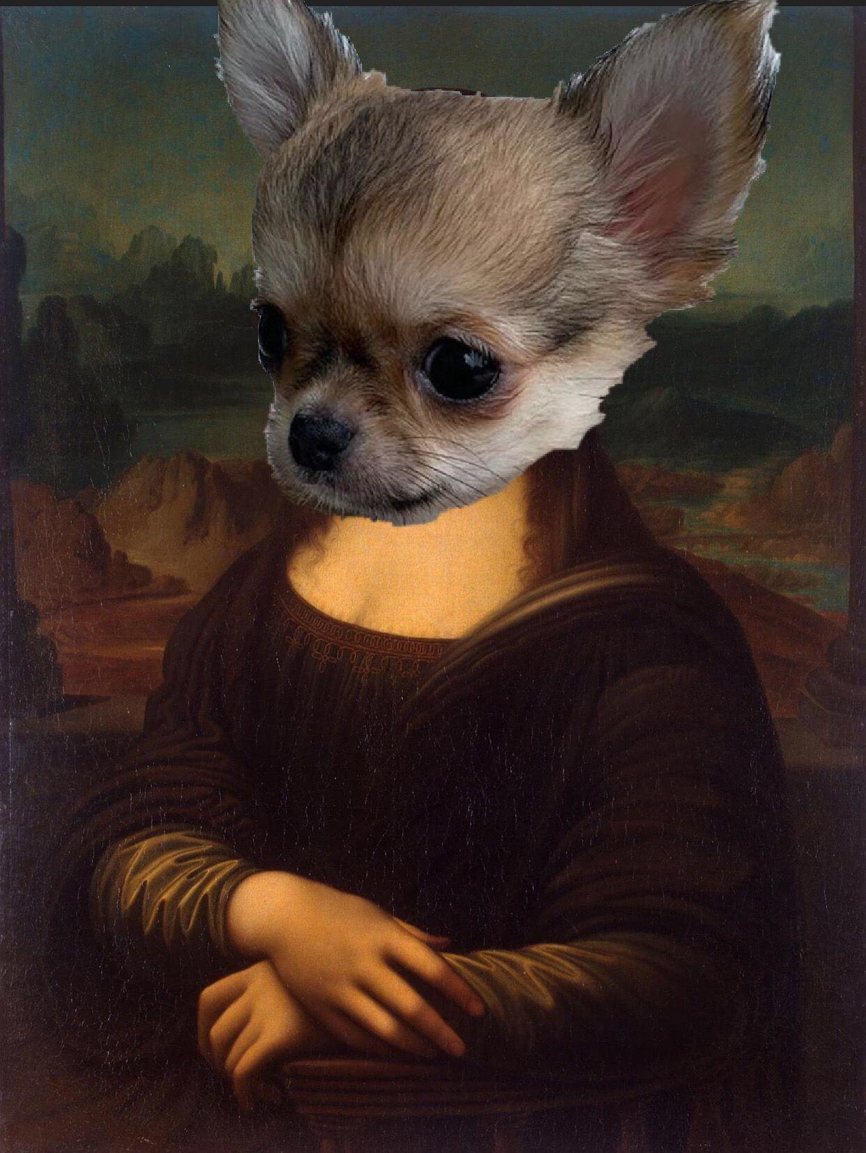 Chihuahua Dog Chiwawa Dog Information Chihuahua Funny