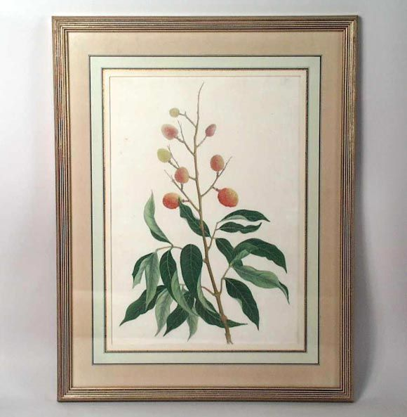 A framed pair of late 18th century Chinese water colors: Leechee Nuts and Bigonia. Listed dimensions include the frames, as shown.