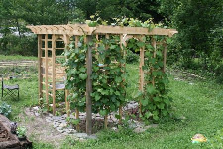 Pergola with Grape Vines..plan on adding pergola to back side of the house for outdoor seating, wanting to grow our grape vines along it