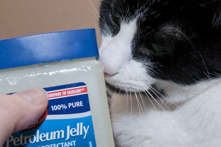 How to Clear a Cat's Stuffy Nose Cat sneezing remedies