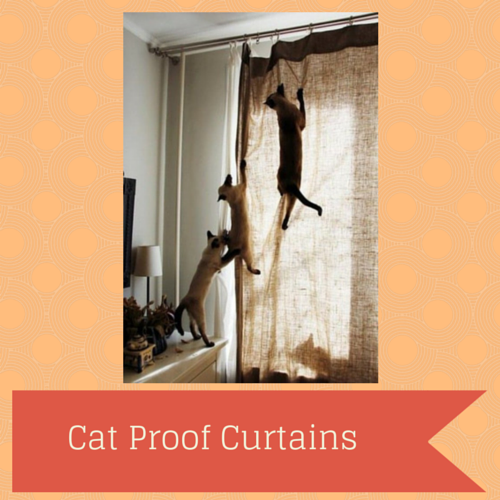 Catproof Blinds Cat Proof Curtains Png Cat Proofing Cats Curtains