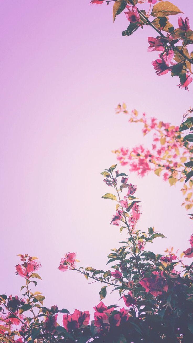 Wallpaper Background Lockscreen Iphone Pink Flowers Flower Background Flower Flowers Iphone Lo Iphone 7 Plus Wallpaper Spring Wallpaper Iphone Wallpaper