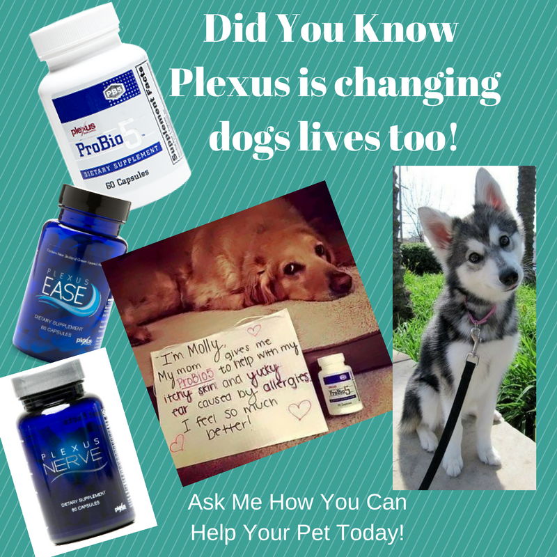Ask me how you can help your pet today!