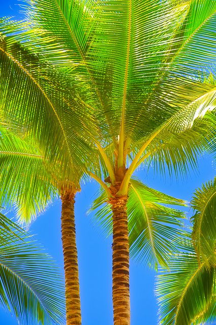 Green Palm Trees, Blue Sky ...