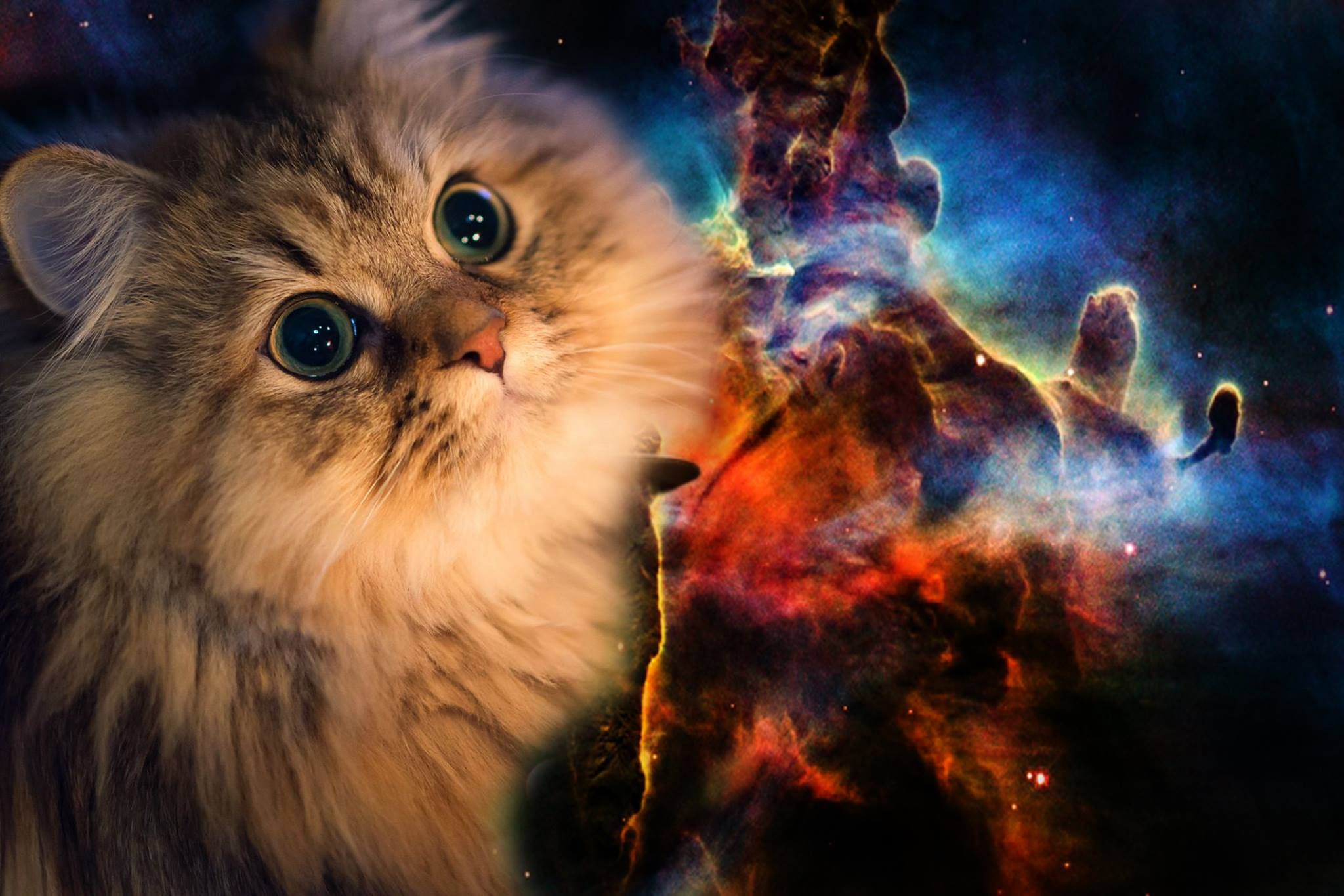 Space Cat Wallpapers High Quality For Desktop Wallpaper Cat