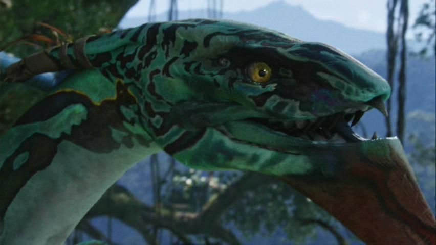 Wallpaper Neytiri Seze Avatar Hd Movies 4115: Google Image Result For Http://images2.wikia.nocookie.net