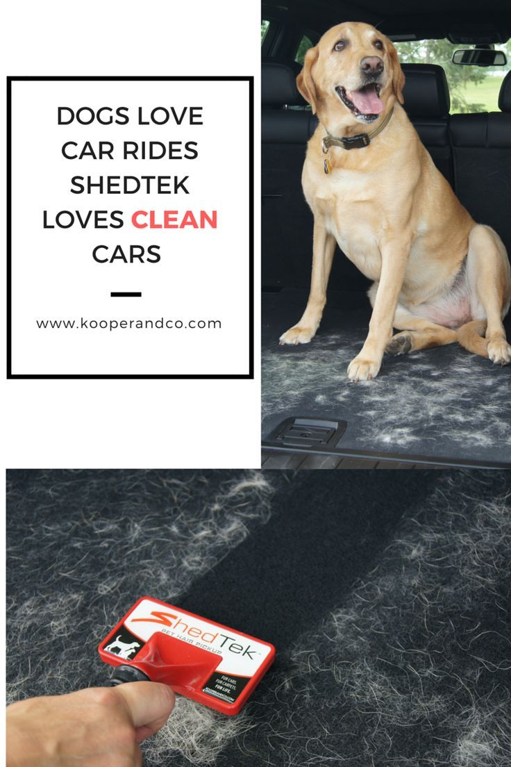 Best Tool For Cleaning Pet Hair And Fur From Carpets Auto Interiors And Other H Carcleaninginterior Learn Mor Dog Hair Vacuum Dog Hair Cleaning Pet Hair