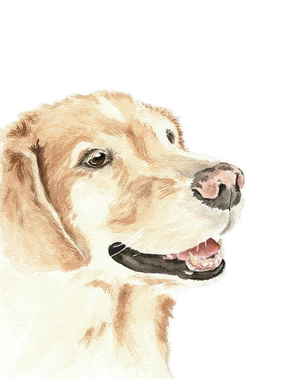 Golden Retriever Print From Original Watercolor Pet By Wrensroost