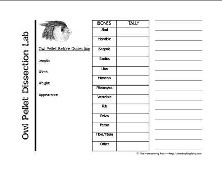 Worksheet Owl Pellets Worksheets owl pellet dissection notebooking pages from notebookingfairy com com