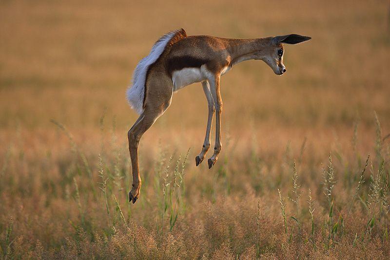 einfach nur schwebend. von Stephan Tuengler