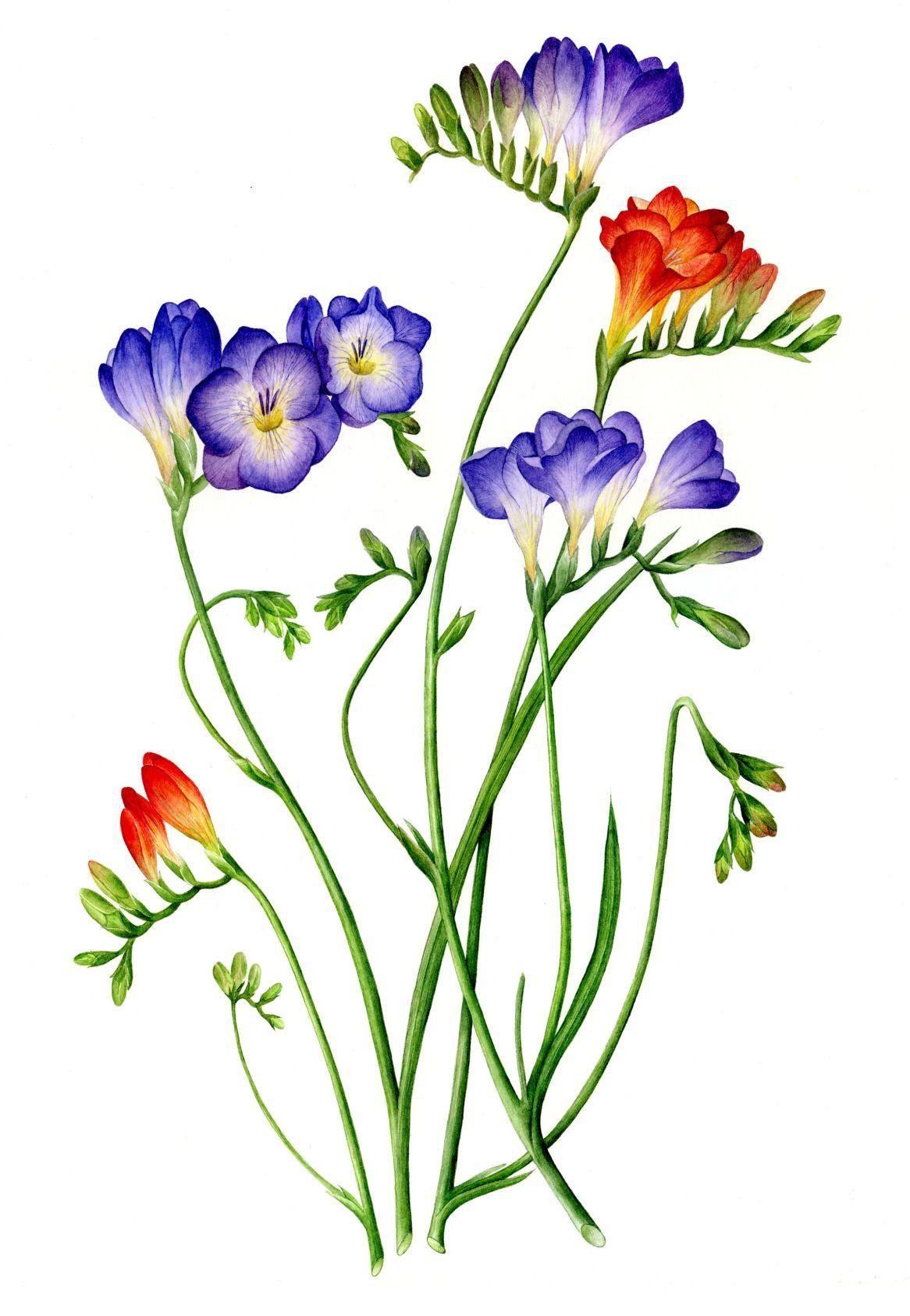 пошаговым рисунок о растениях детям машет