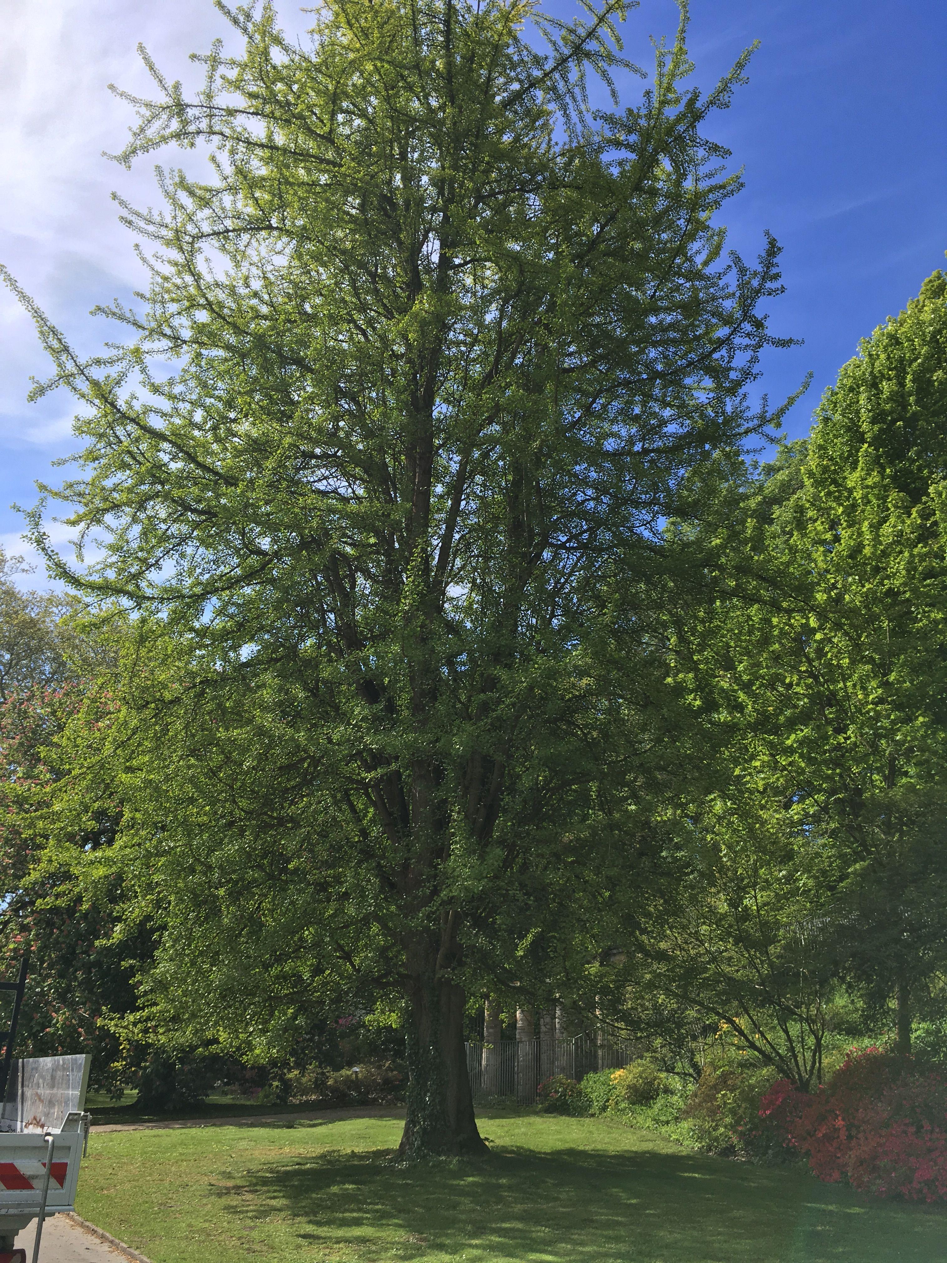 Pin By On Botanischer Garten Rombergpark Tree Plants Tree Trunk