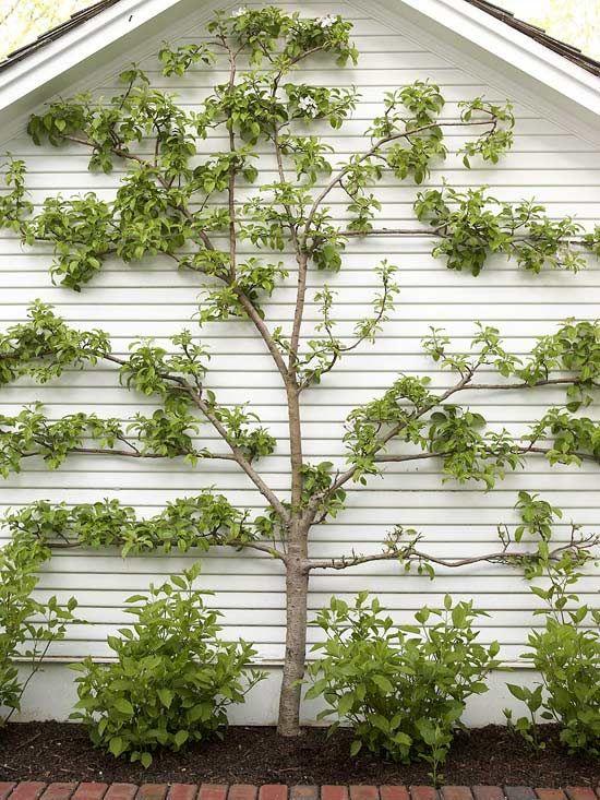 Tidsmæssigt Top Garden Trends for 2013 | Gardens and Yards | Espalier fruit PV-58