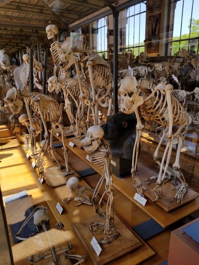 Museum Of Comparative Anatomy Paris France Dias De Los Muertos