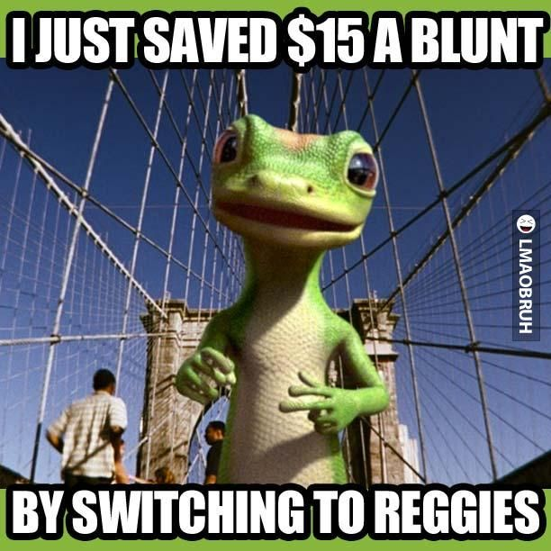 Geico New Quote Geico Gecko Knows How To Save You 15 Dollars A Blunt Things That