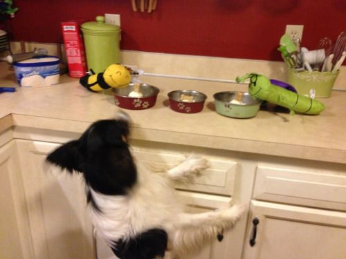 daboys:  Its party time people! Home made doggy sundaes and two...
