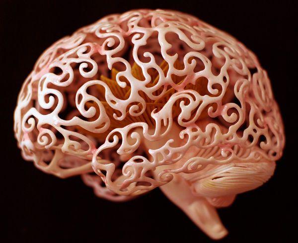 Una Replica 3d Del Cerebro De Una Mosca De La Fruta Light Show Picture Light Prints